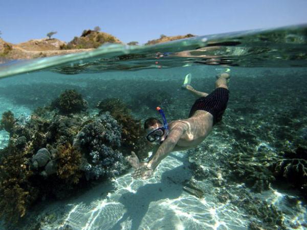 snorkeling equipement pour plonger