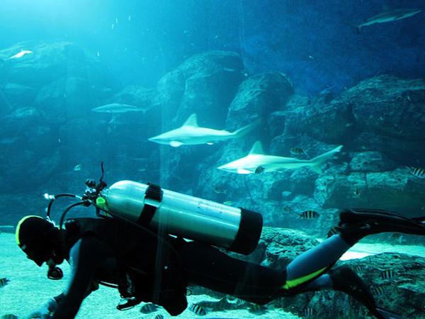 plonger avec des requins sans cage