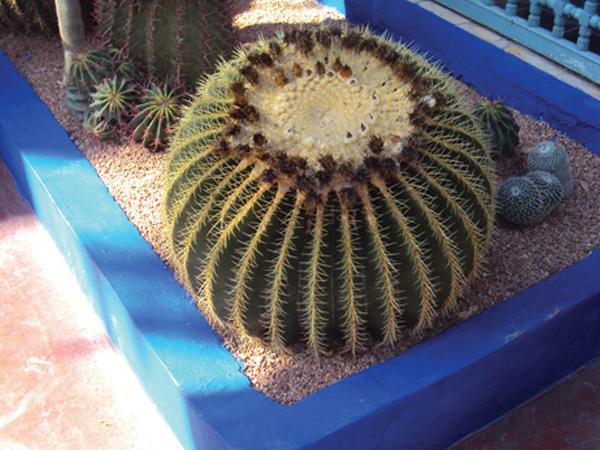 Cactus boule Jardin Majorelle