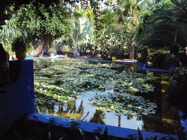 Le jardin majorelle de marrakech mes souvenirs de voyage for Le jardin majorelle