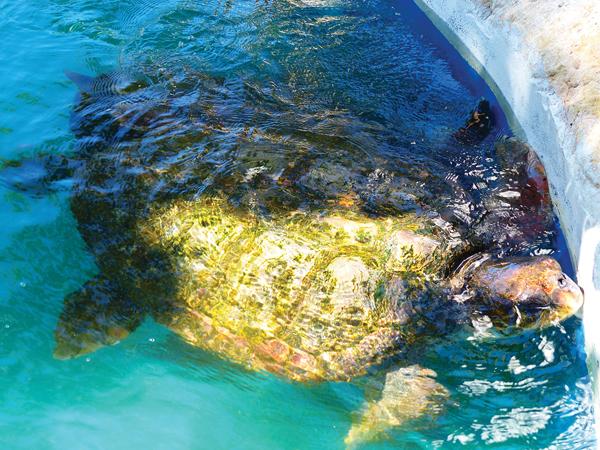 centre de protection des tortues Praia BRESIL