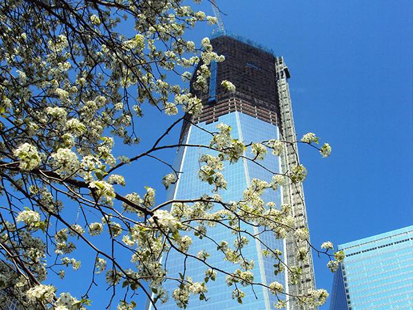 survivor tree et nouveau World Trade Center