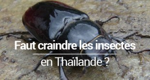 Faut-il craindre les insectes en Thaïlande blog voyage