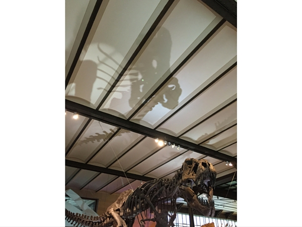 Dinosaure musée Histoire Naturelle Bruxelles