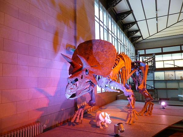 Musée d'histoire naturelle bruxelles dino