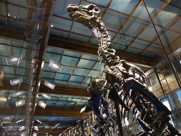 dinosaure musee histoire naturelle