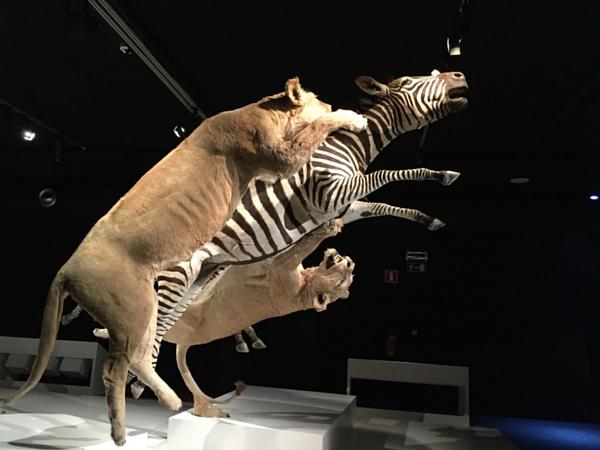 exposition temporaire musée histoire naturelle bruxelles