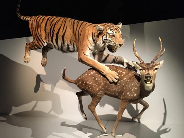 musée bruxelles histoire naturelle predateur