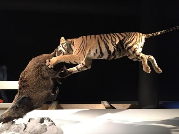 musée histoire naturelle exposition temporaire