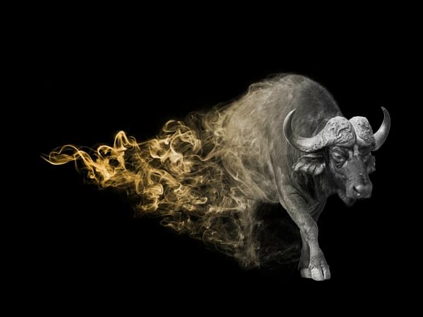 Big Five Afrique du Sud buffle