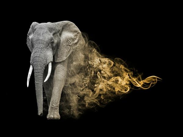 Big Five Afrique du Sud éléphant