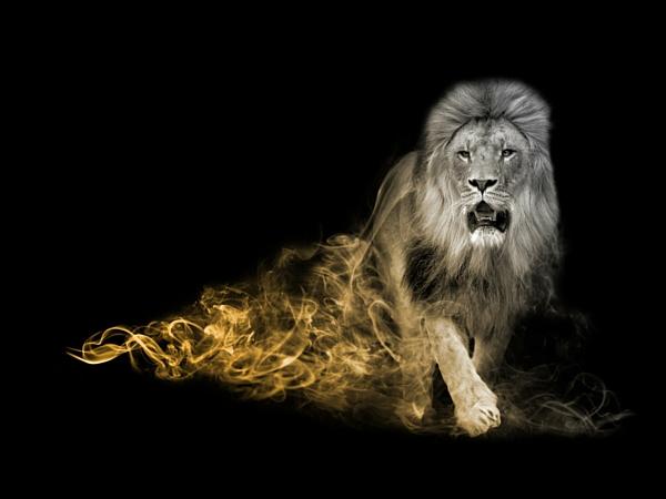 Big Five Afrique du Sud lion