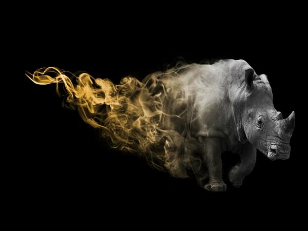 Big Five Afrique du Sud rhinocéros