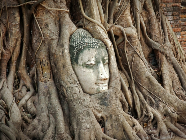 Wat Phra Mahathat tête coincée dans un arbre visiter Ayutthaya