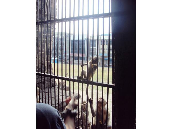 etre-en-cage-devant-les-singes-a-lopburi