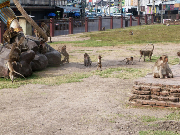 lopburi-envahie-par-les-singes-thailande