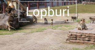lopburi-la-ville-des-singes