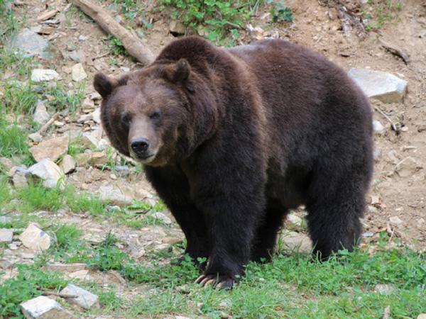 ours-grotte-de-han