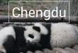 Chengdu : pandas adorables et bouddha immense