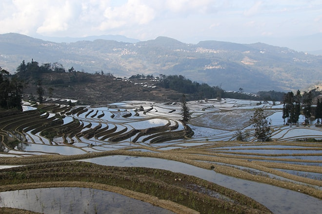 reflet dans les rizieres en terrasse Yuanyang Chine