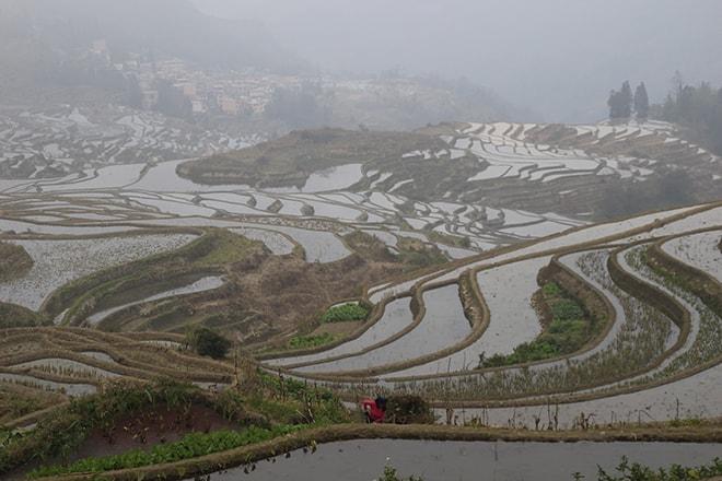 rizieres en terrasse Chine