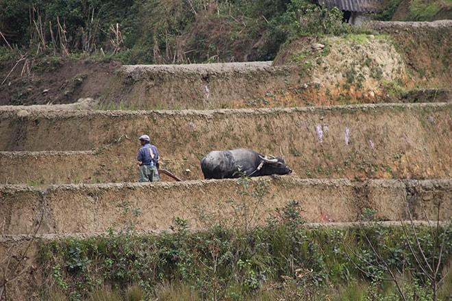 travail des rizieres Yuanyang Chine
