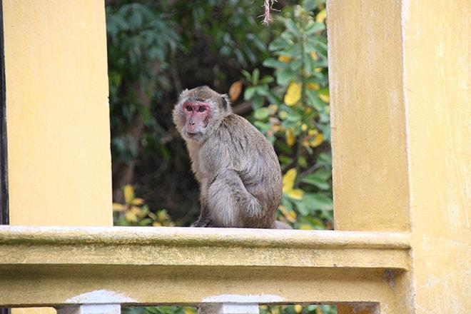 Monkey Island Cat Ba Baie d'Halong Vietnam