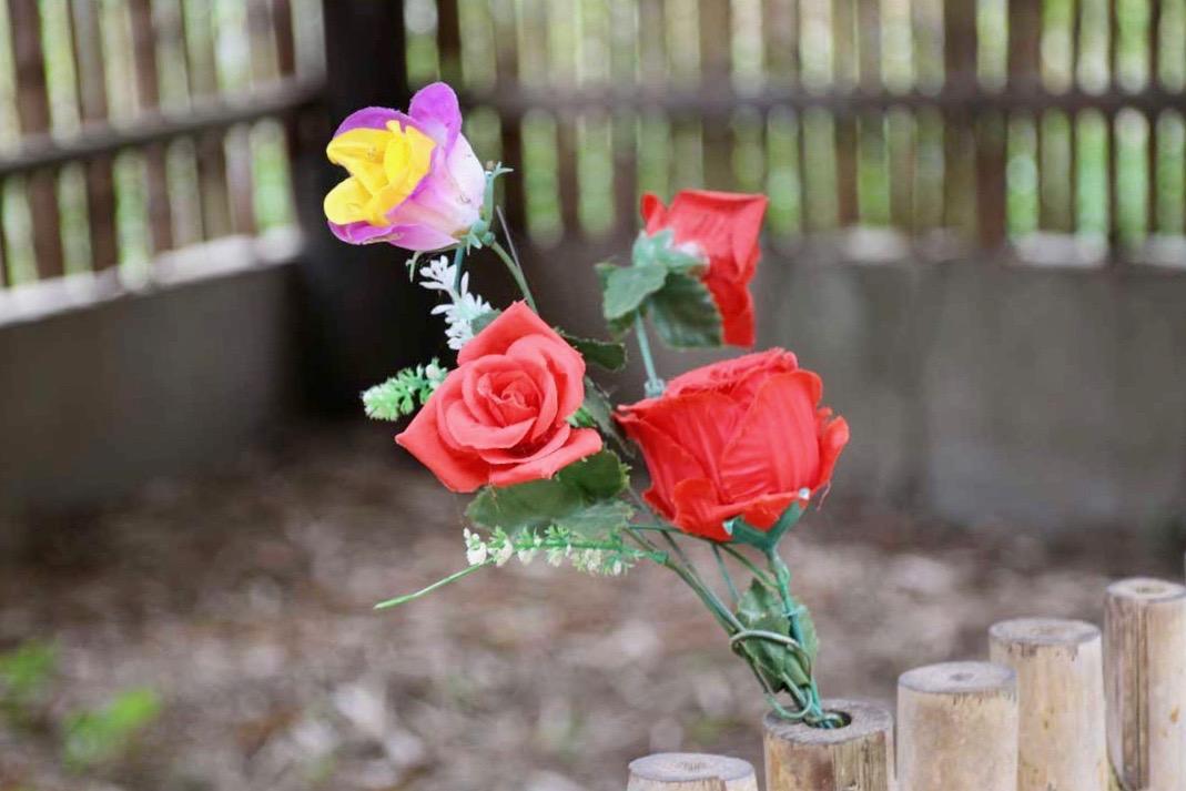 fleurs Killing Fields Phnom Penh Cambodge