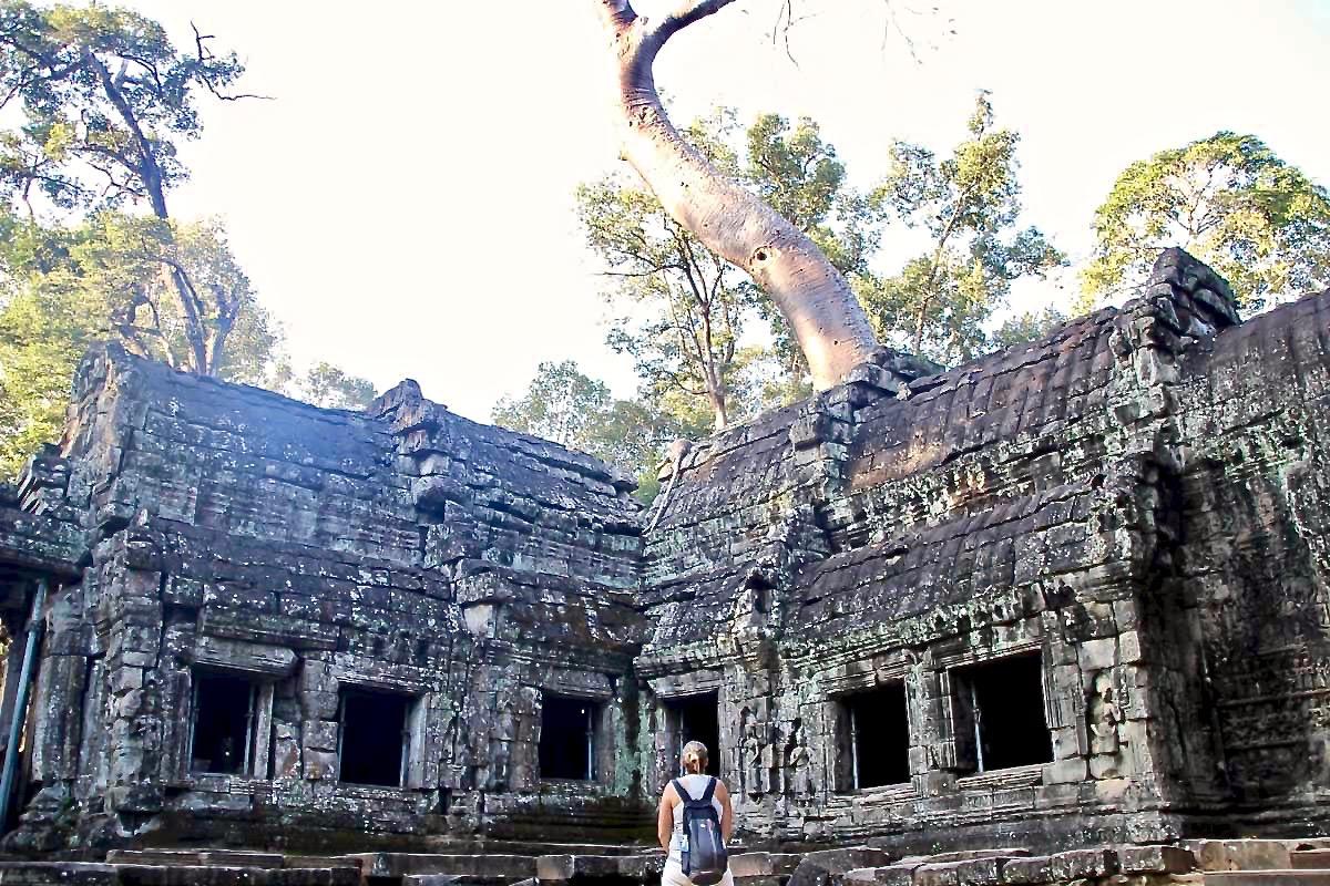 Elo arbre Temples Angkor Cambodge