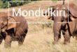 Mondulkiri elephants sen monorom cambodge