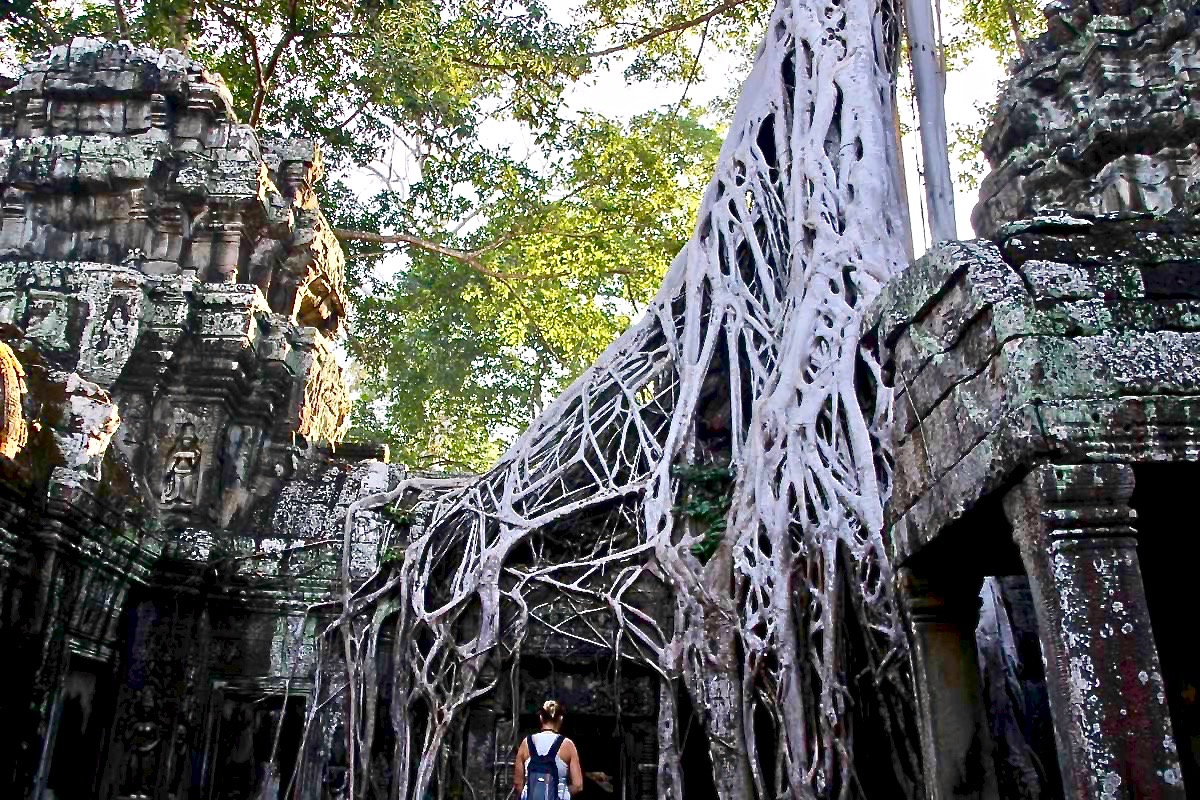 Nature Ta Phrom Temples Angkor Cambodge