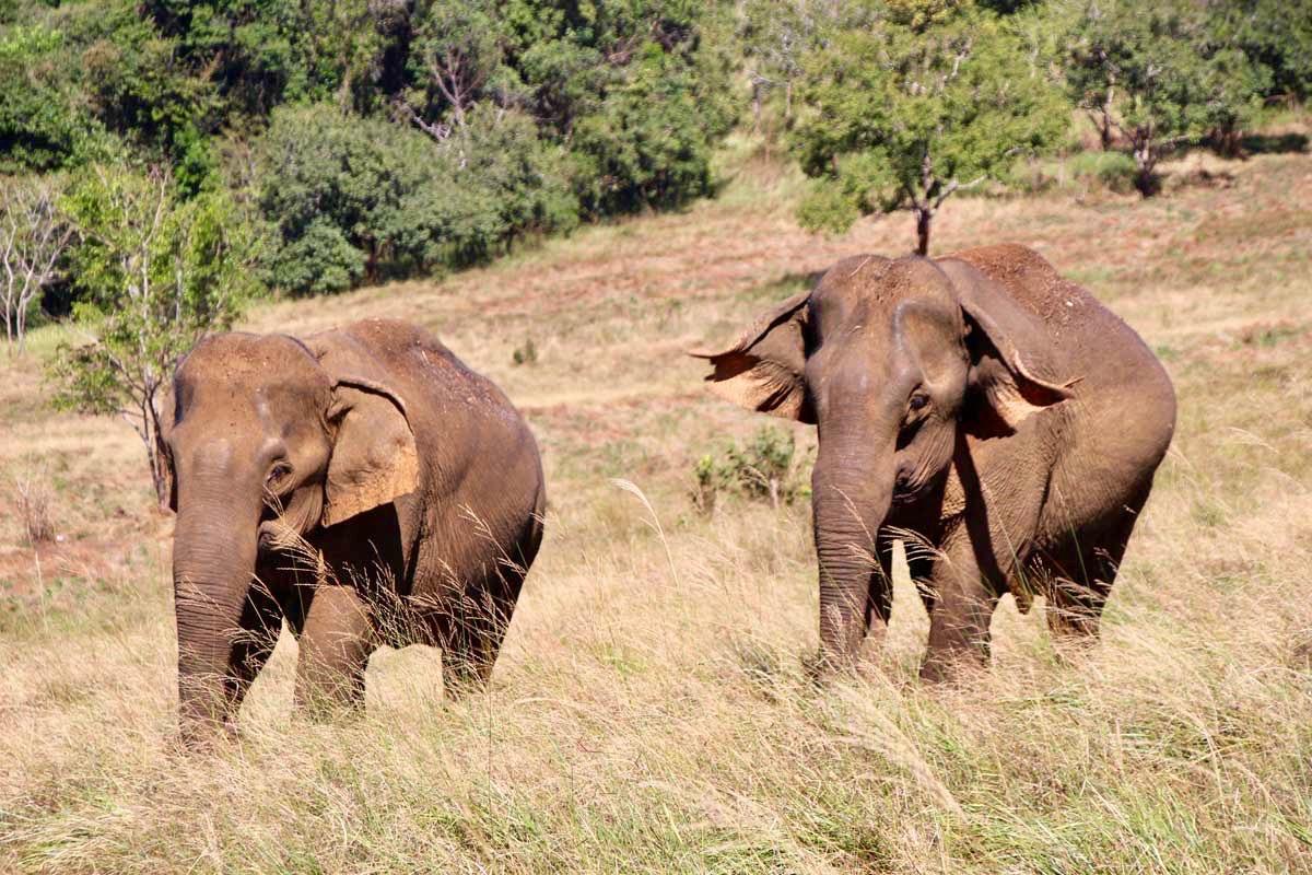 arrivee elephants Sen Monorom Mondulkiri