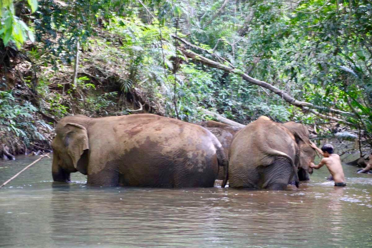 bain elephants Sen Monorom Mondulkiri