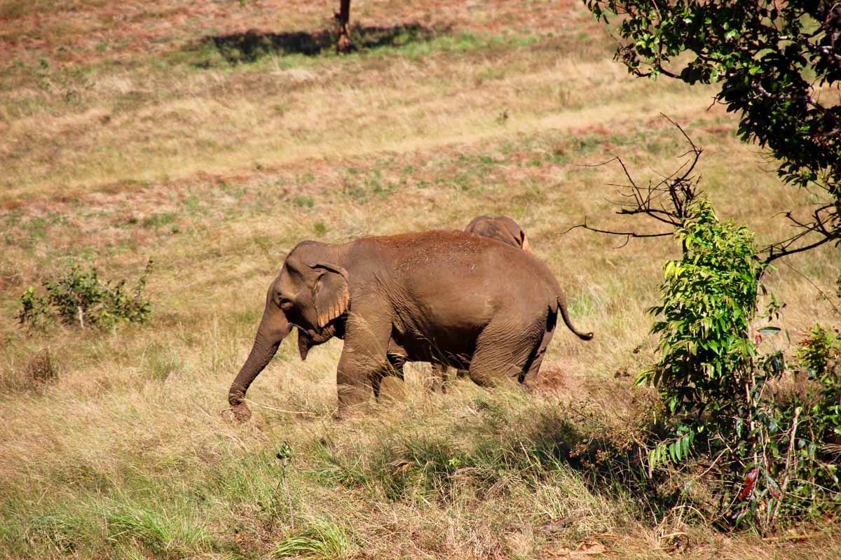 elephant Sen Monorom Mondulkiri
