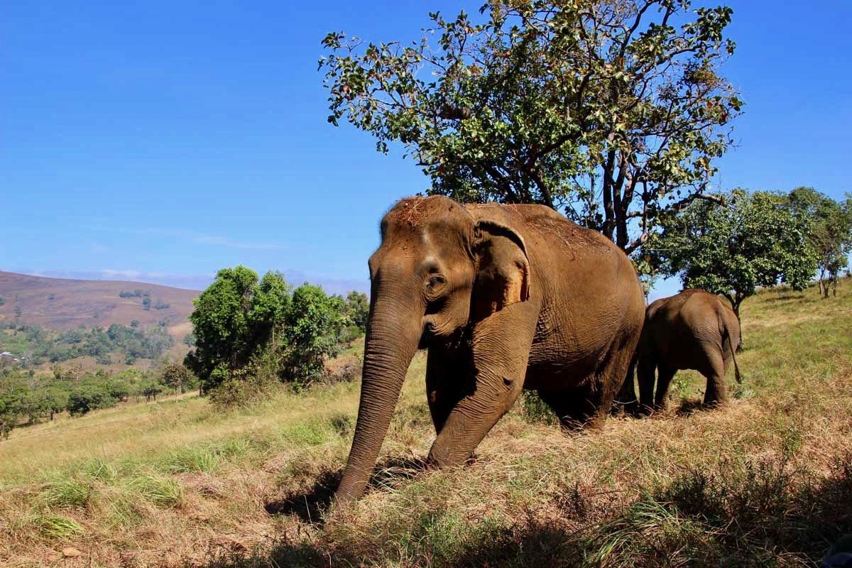 elephant approche Sen Monorom Mondulkiri