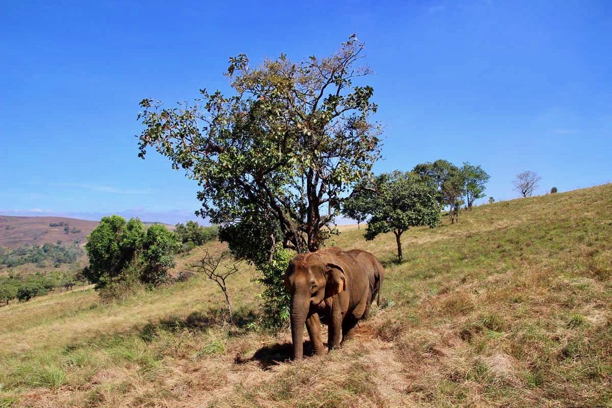 elephants de loin Sen Monorom Mondulkiri
