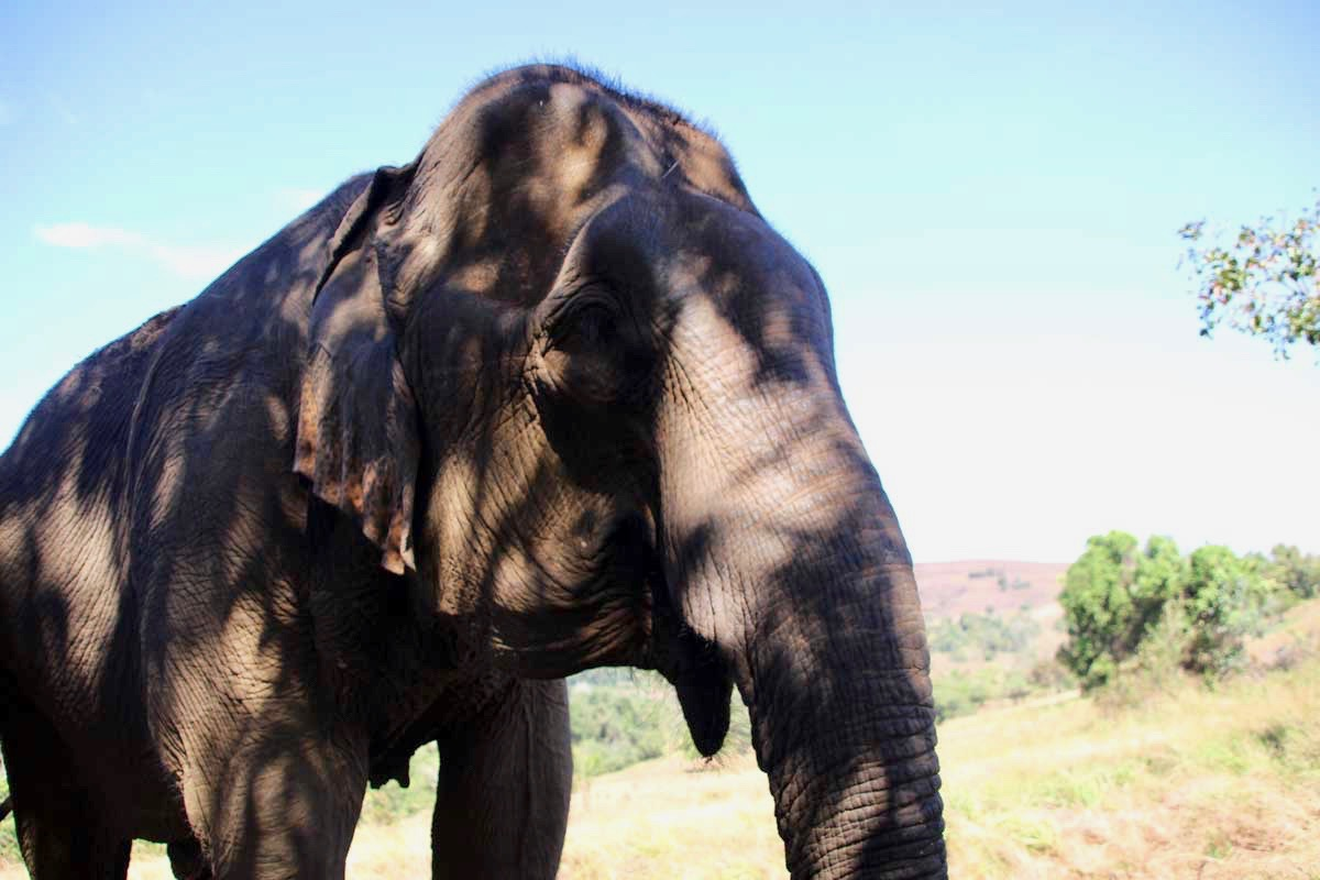 tete elephant Sen Monorom Mondulkiri