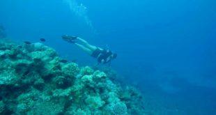 moniteur plongee Cairns Grande Barriere de Corail