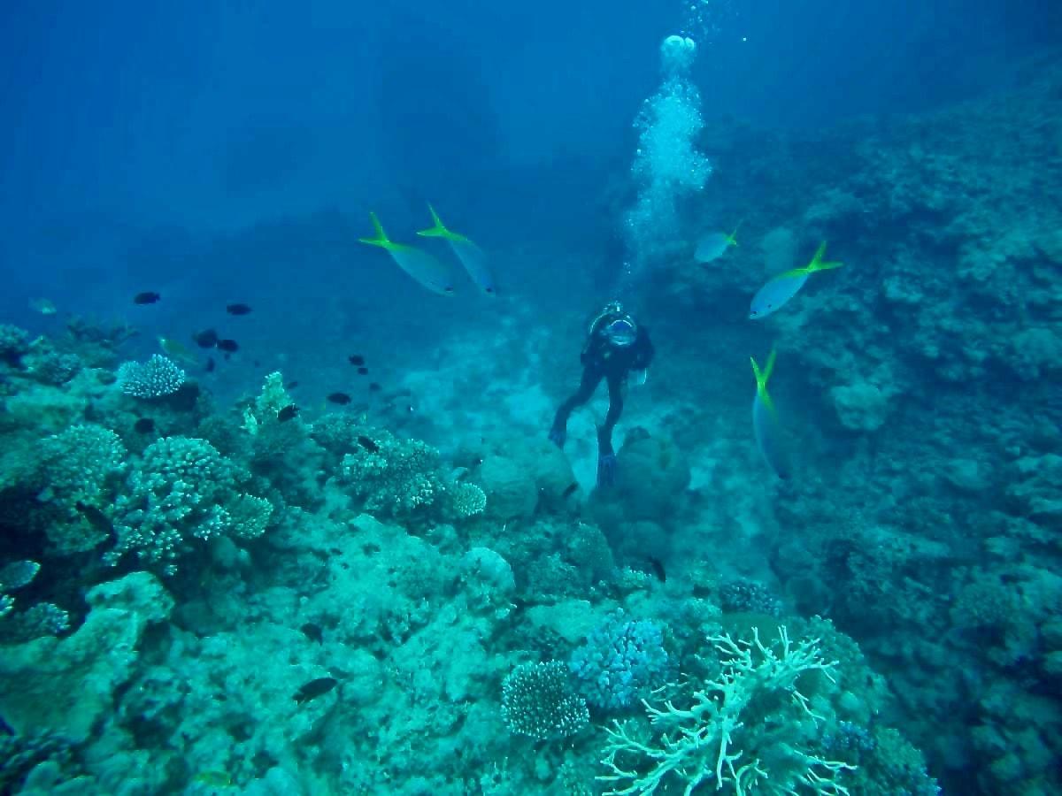 plongee Cairns Grande Barriere de Corail