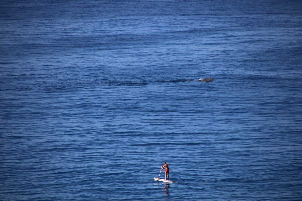 dauphins et stand up paddle Noosa Australie