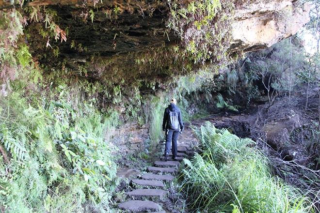 Chemin vers les cascades Blackheath