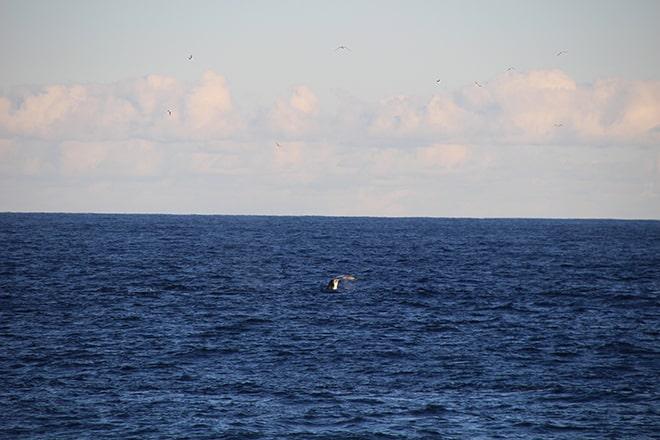 Newcastle Baleine Australie