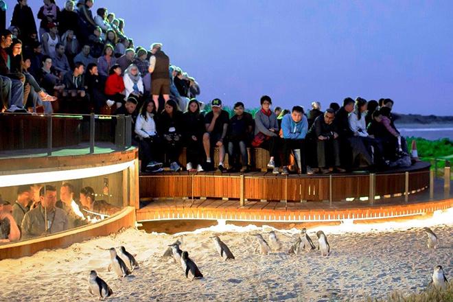 Penguin Parade Centre - Phillip island
